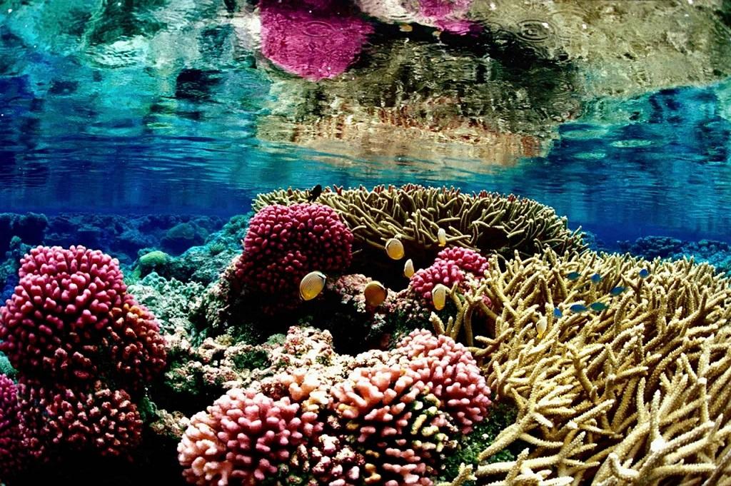 Australia, Mar dei Coralli, reef