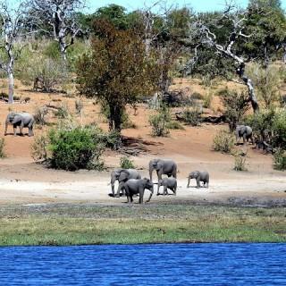Botswana, elefanti
