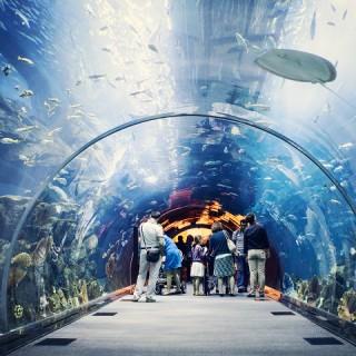 Dubai, Mall Aquarium