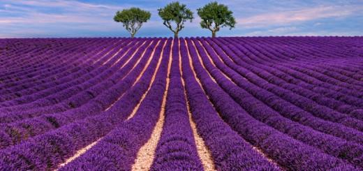 Valensole, Francia, campi di lavanda