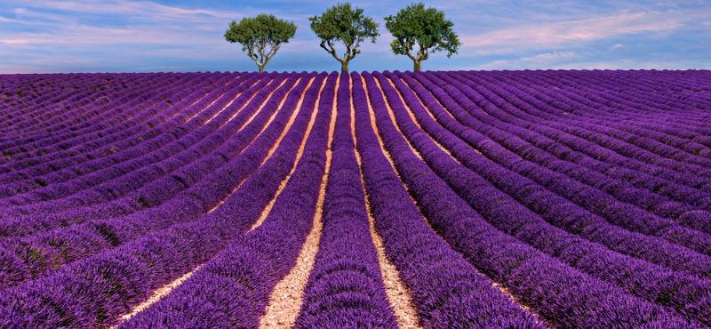 valensole-francia-campi-lavanda