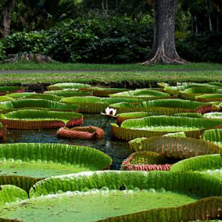 Mauritius, natura