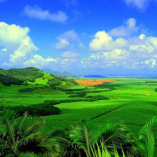 Mauritius, piantagioni