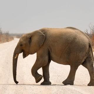 Namibia, elefante