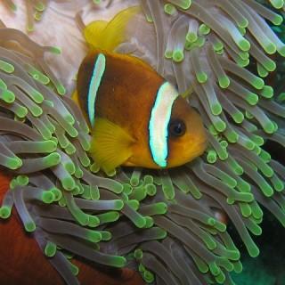 Seychelles, anemoni