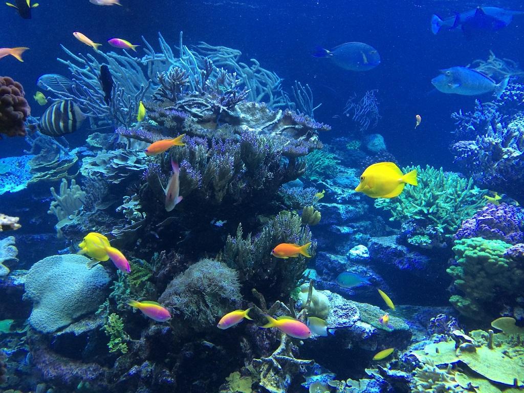 Seychelles, barriera corallina