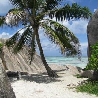 Seychelles, palma