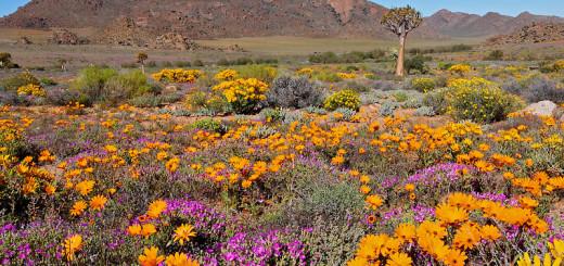 Sudafrica, deserto di Namaqualand