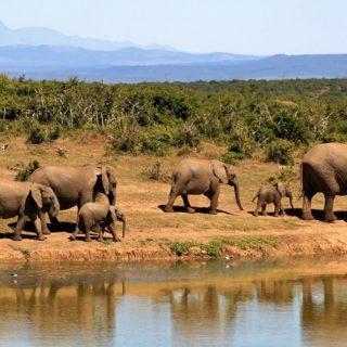 Sudafrica, safari, elefanti