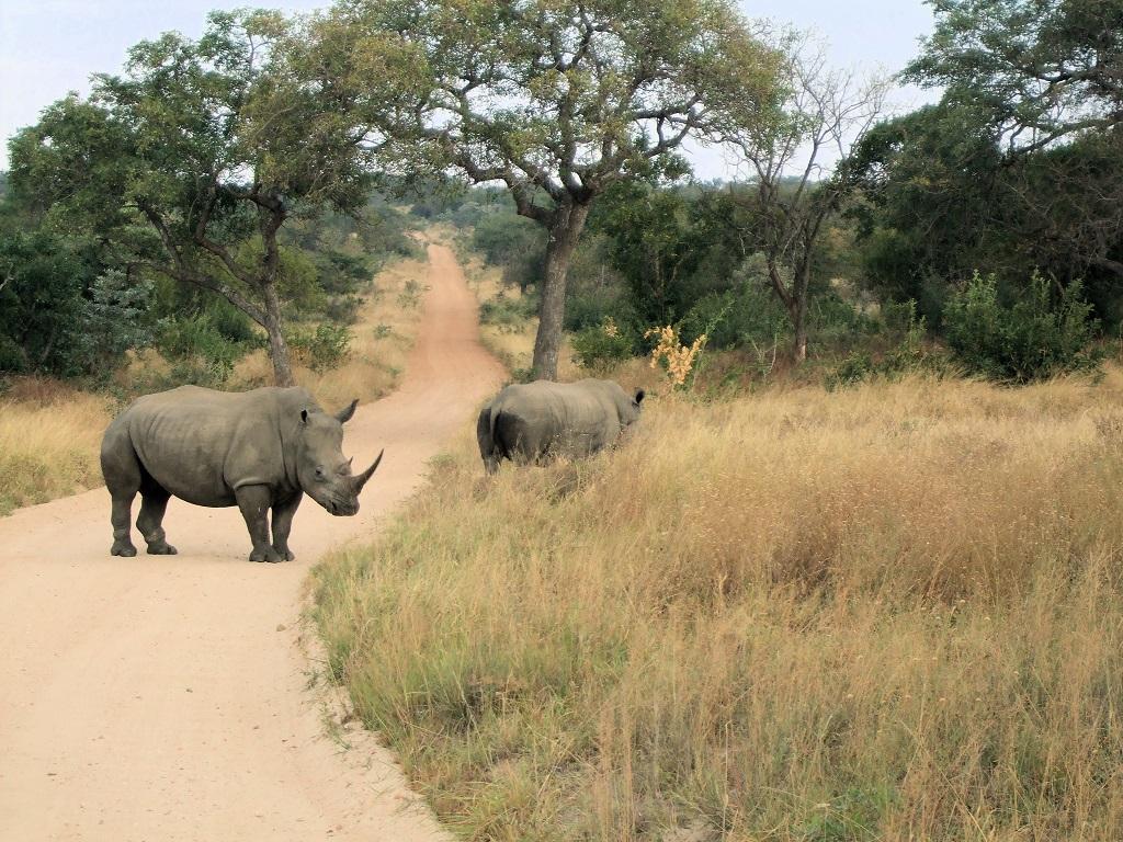 Sudafrica, safari