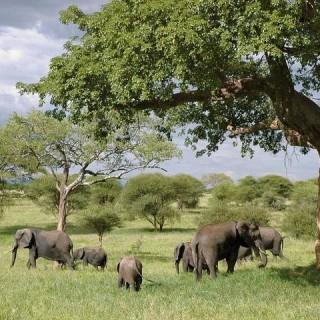 Tanzania, elefanti