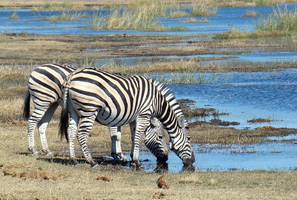Tanzania, zebre, safari