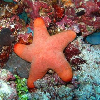 Thailandia, stella marina
