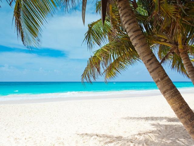 Viaggi ai Tropici