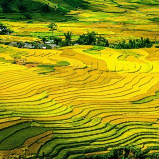Vietnam, terrazze di riso